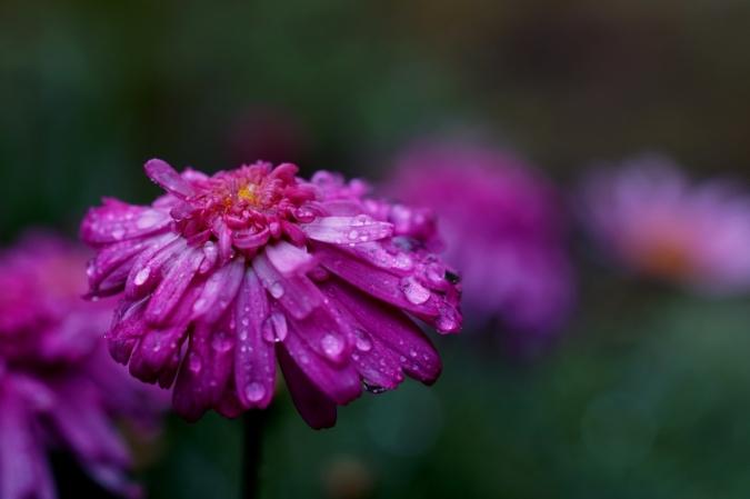 DSC02798雨