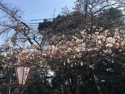 3302017 比治山桜S1