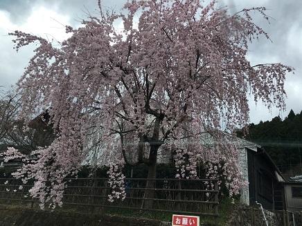 11番へ向かう道の駅桜S3