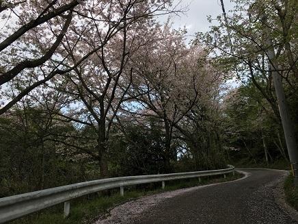 4122017 真道山千本桜S1