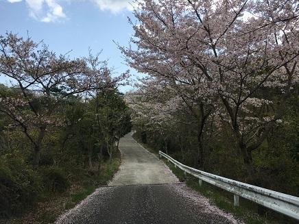 4122017 真道山千本桜S3
