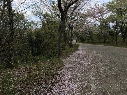 4122017 真道山千本桜S5
