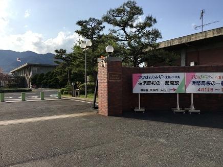 4182017 広島造幣局八重桜さくらみちS1