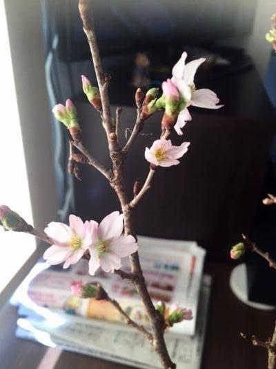 securedownloadけいおう桜