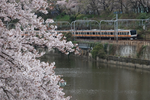 中央線と桜