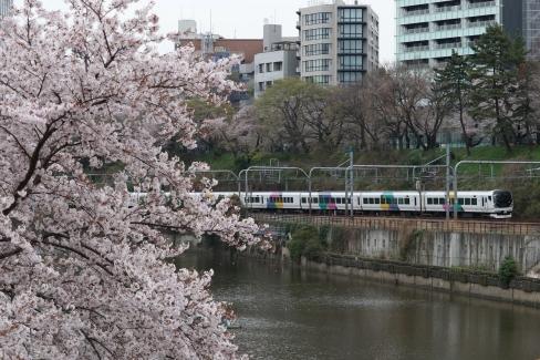 特急あずさ号と桜