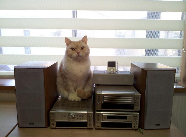 オーデイオ猫