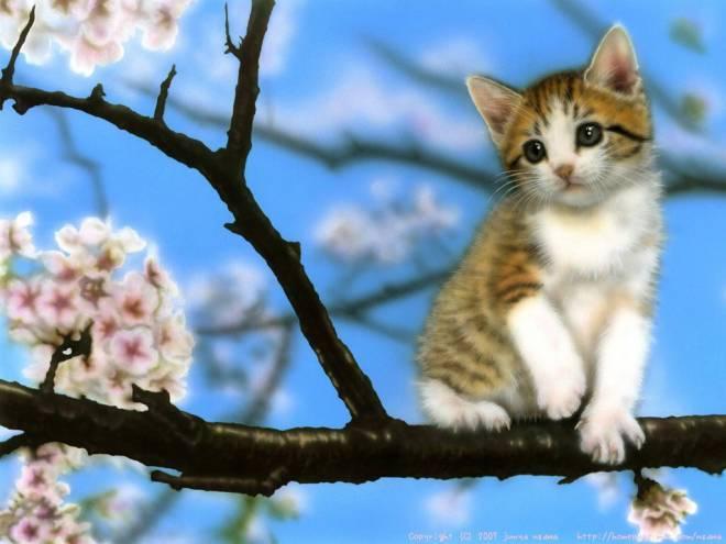 sakura猫