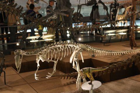 化石(1)