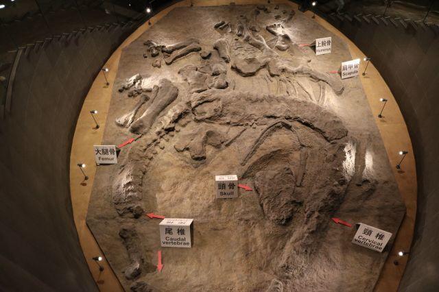 化石2(1)