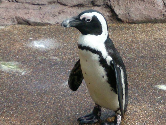 ペンギン2(1)