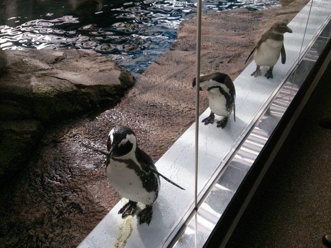ペンギン5(1)