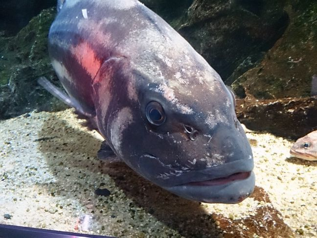 魚4(1)