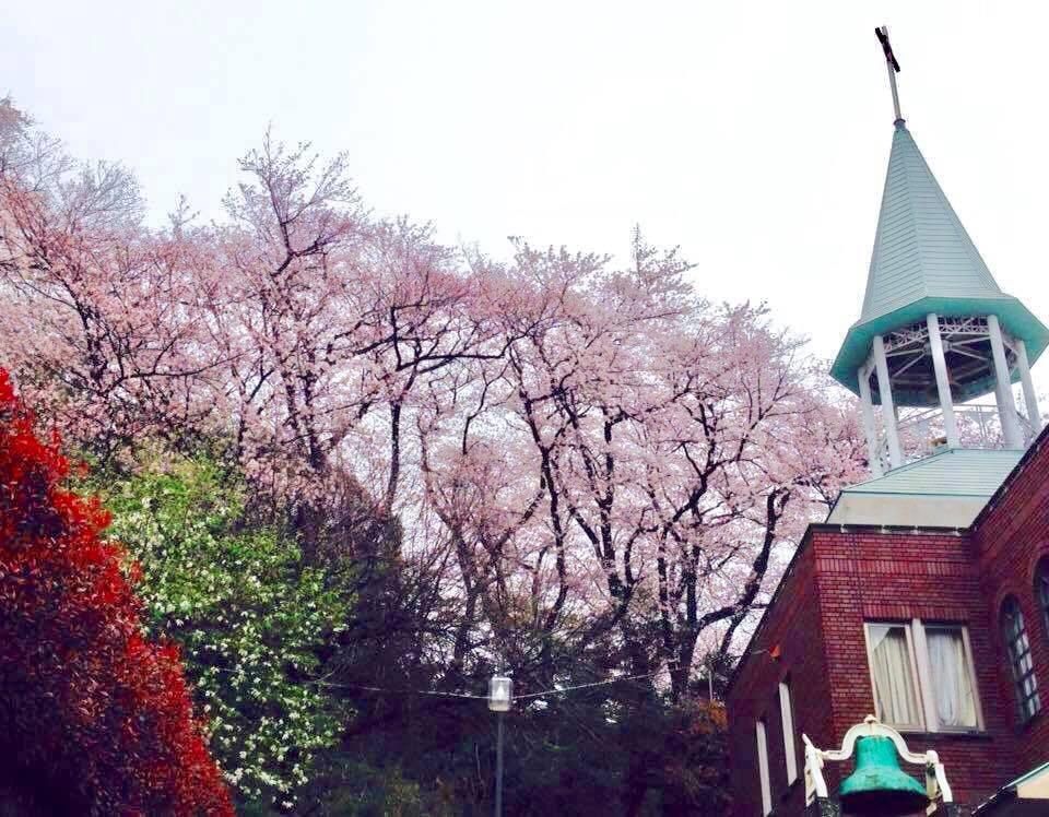 Sakura at Shimizugaoka Church
