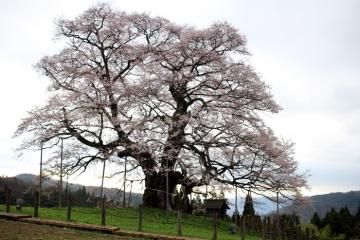 2017-04-12 醍醐 045