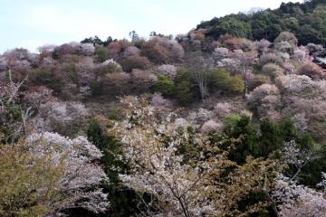 2017-04-16 yosino 017