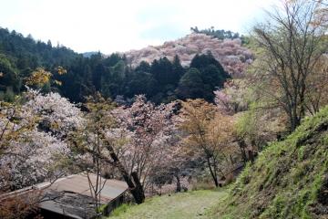 2017-04-16 yosino 021