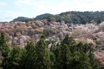 2017-04-16 yosino 027