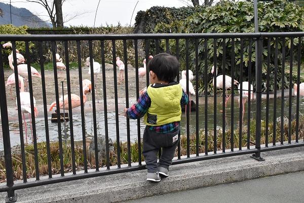 安佐動物公園2