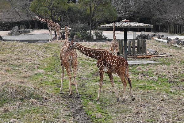 安佐動物公園3