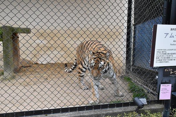 安佐動物公園7