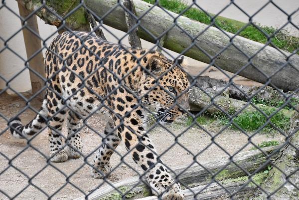 安佐動物公園8