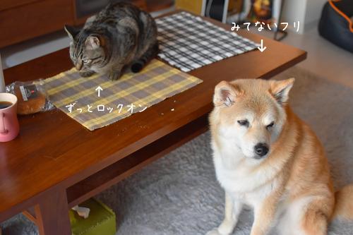 ☆DSC_0738 (1E) (1)thum