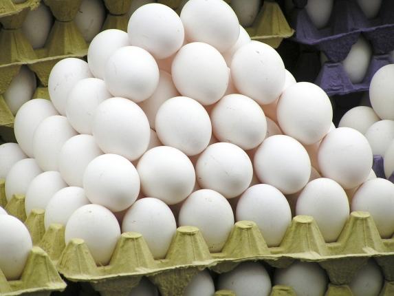 egg-818191_1280.jpg