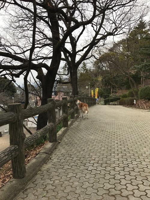 枚岡公園03