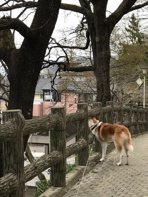 枚岡公園05