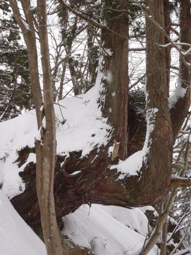 雪を抱える天杉一郎