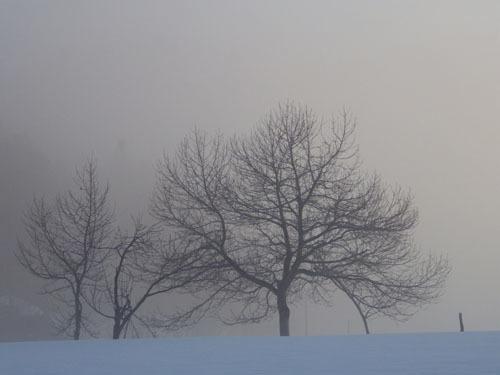 170312 霧の森林公園2