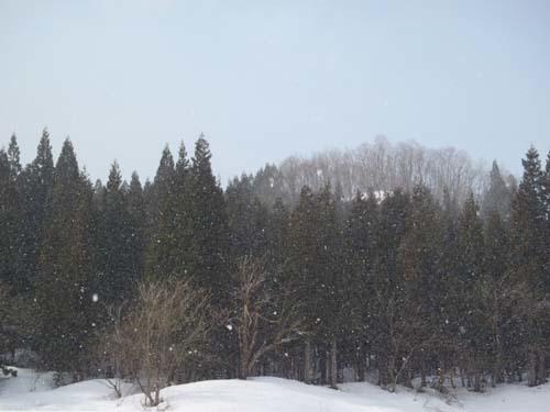 170325 雪