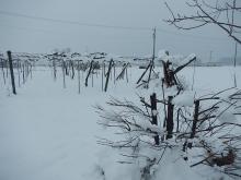 雪の再来 (1)