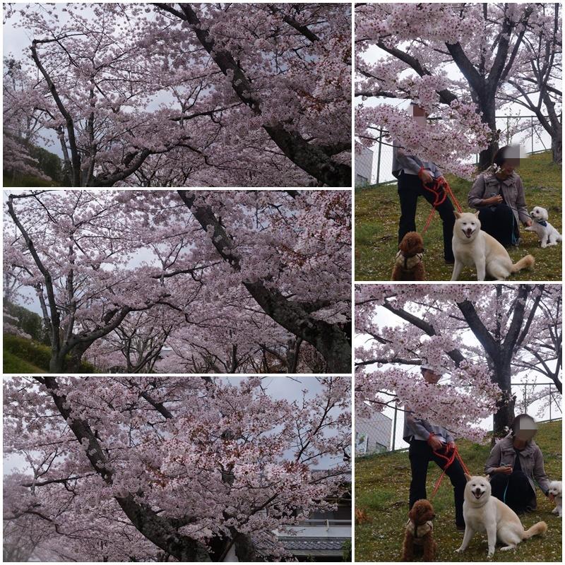 4匹のお花見!