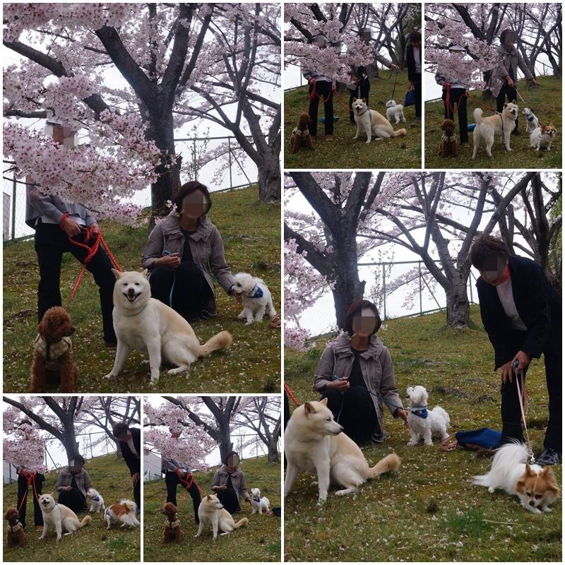 4匹のお花見!2