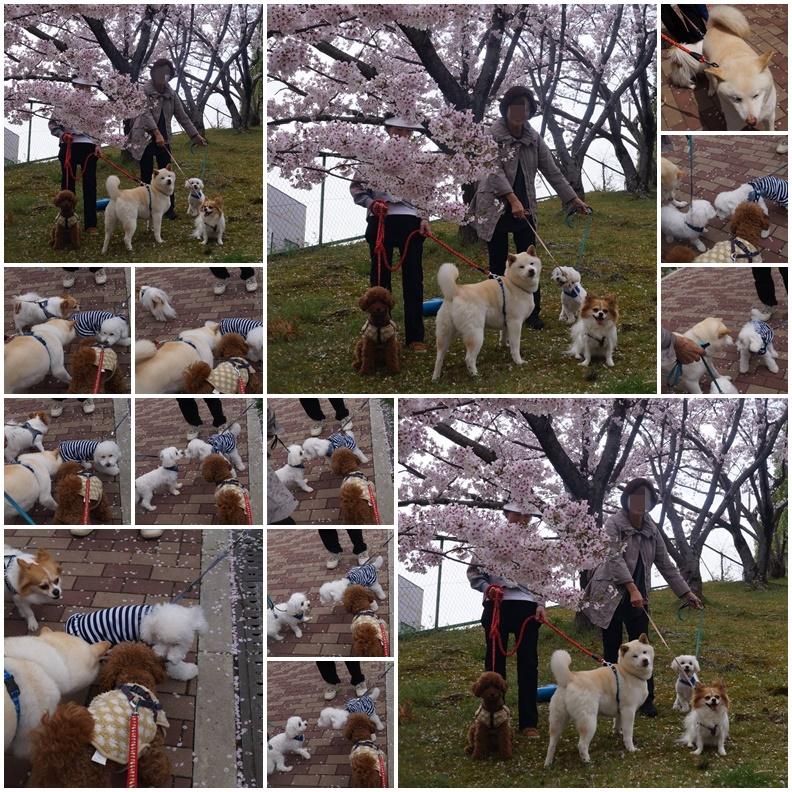 4匹のお花見!3