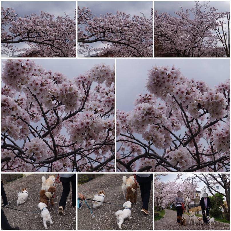 4匹のお花見!4