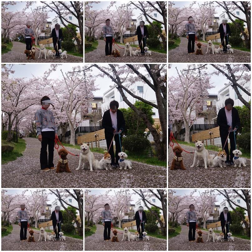 4匹のお花見!5