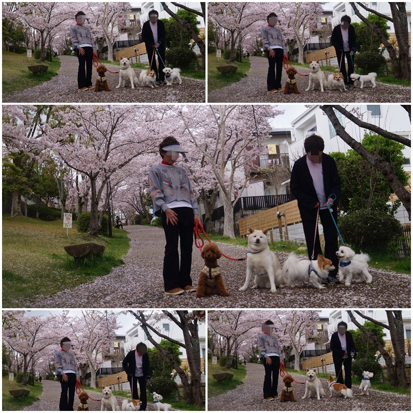 4匹のお花見!6