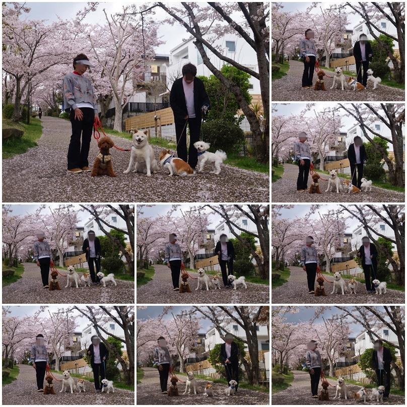 4匹のお花見!7