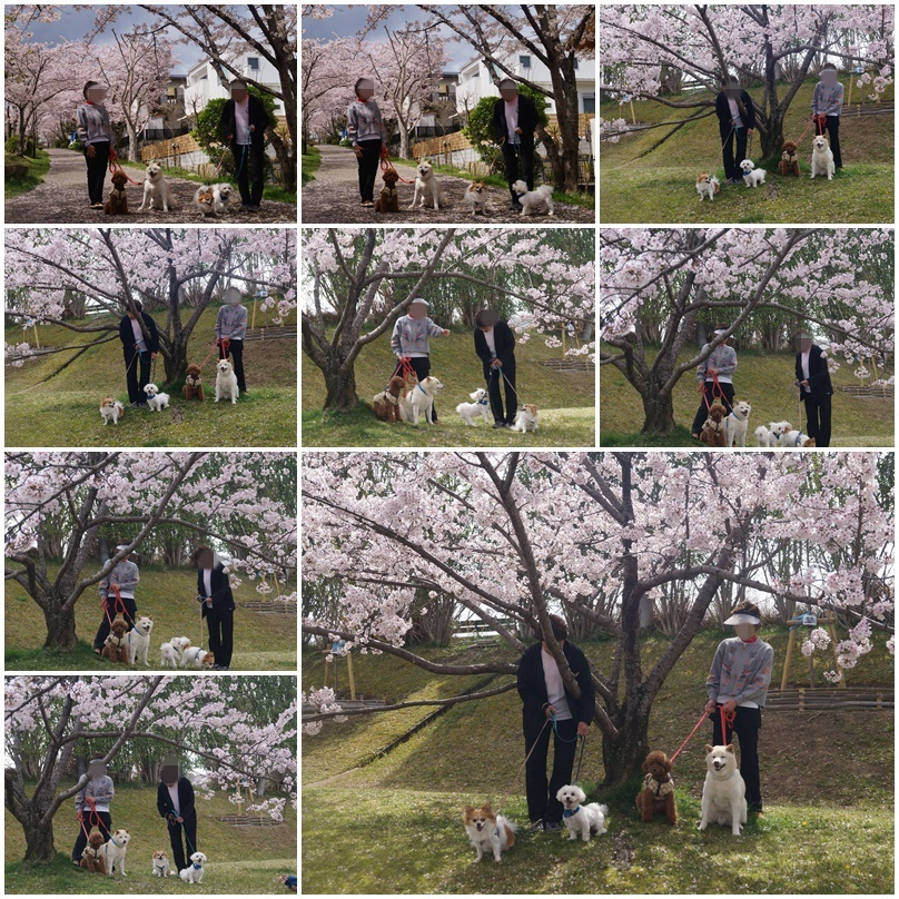 4匹のお花見!8