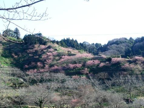 20170206 借景梅満開! 171-2