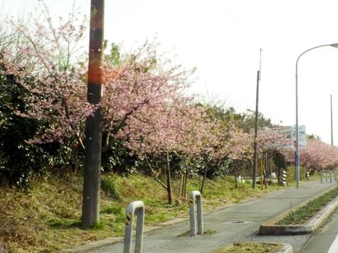 20170226 白子桜 011-2