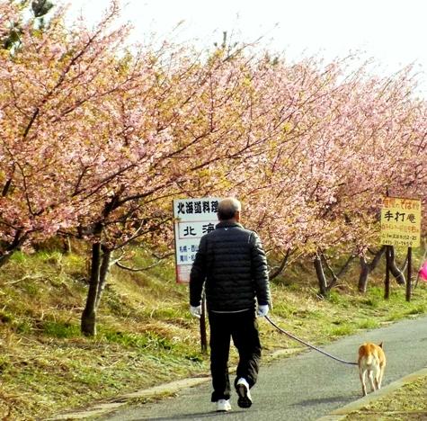 20170226 白子桜 013-4