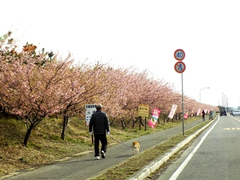 20170226 白子桜 013-2