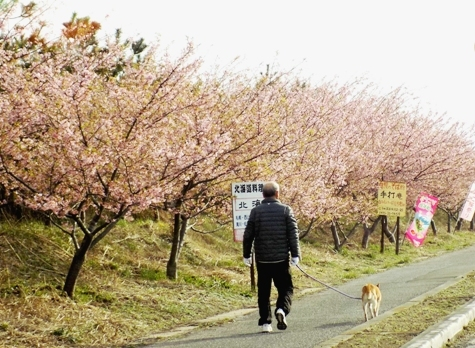 20170226 白子桜 013-3
