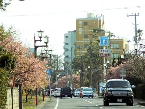 20170226 白子桜 026-2