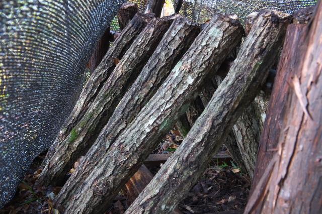 椎茸のホダ木