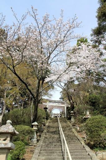 田原神社参道のソメイヨシノ